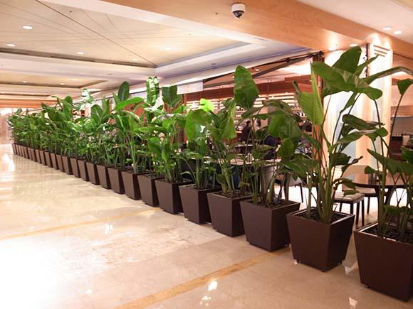 植物壁 アクアリウム; 植物壁 部分; 植物壁