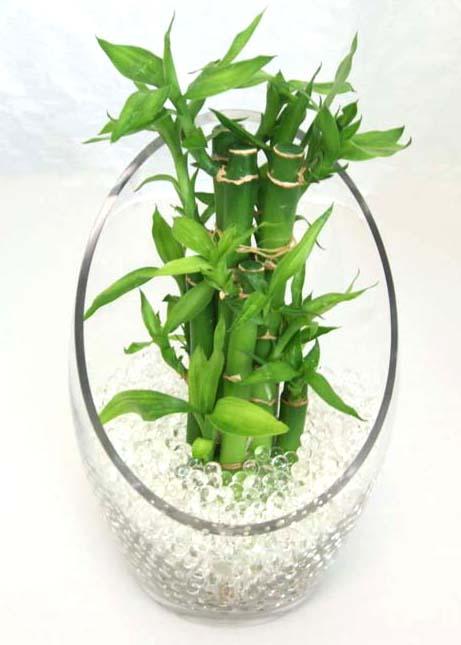 おしゃれな観葉植物 ミニサイズ観葉植物 ブルーミング