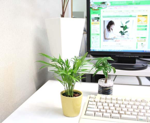 デスクに観葉植物