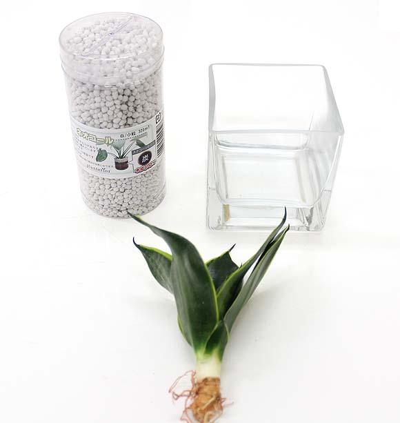 サンスベリア ハーニーの種木でミニ観葉植物の簡単な作り方はこちら!