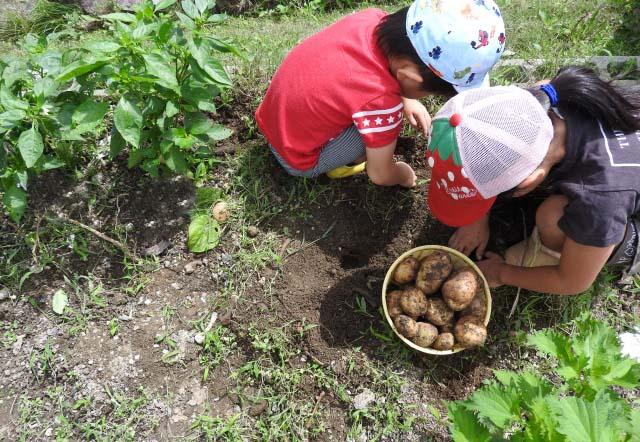 ジャガイモ 植え付け 時期 の 秋