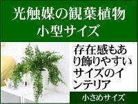 小型 人工 観葉植物