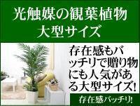 大型 人工 観葉植物
