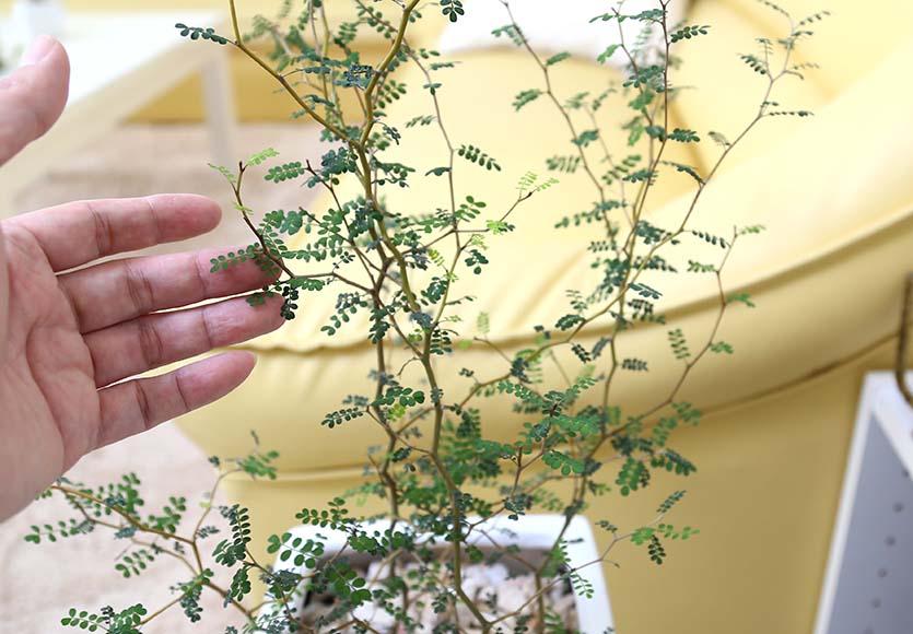 メルヘンの木