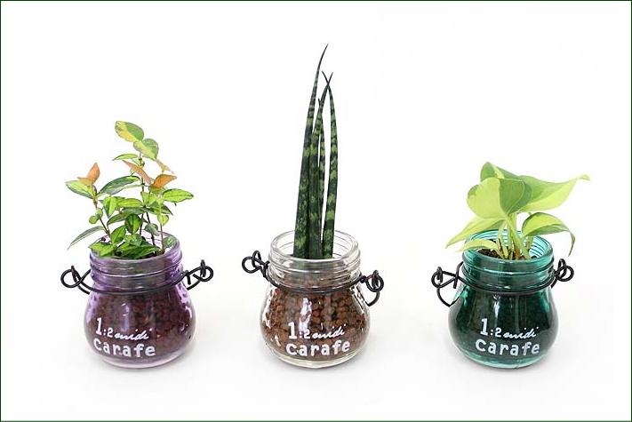 壁につりあげてインテリアとして楽しむこともできるミニ観葉植物
