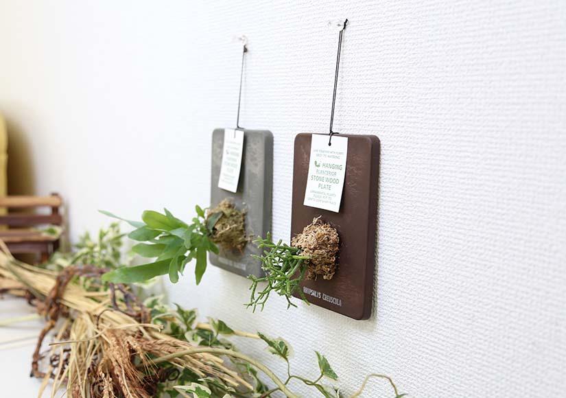 おしゃれな着生植物 壁掛けインテリア