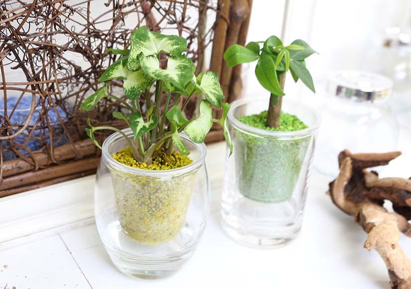 フロートミニ観葉植物