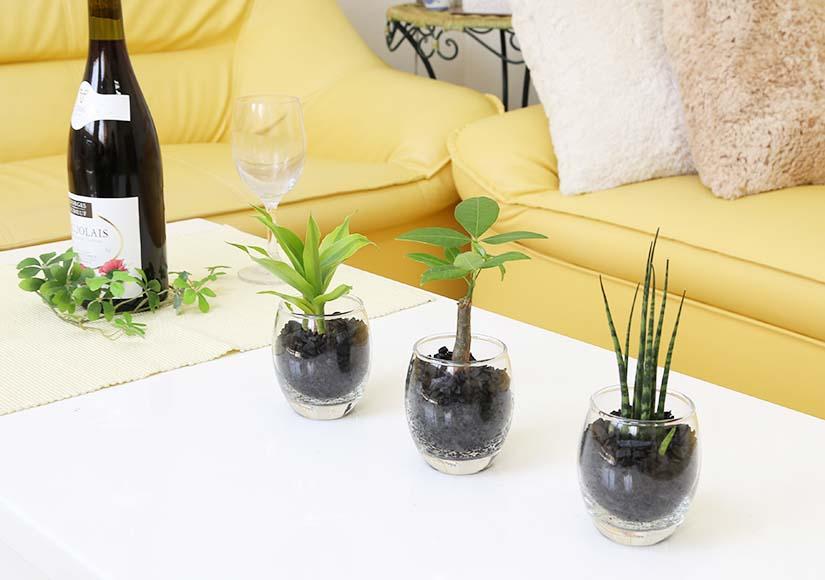 ミニ観葉植物 ECO 炭植え