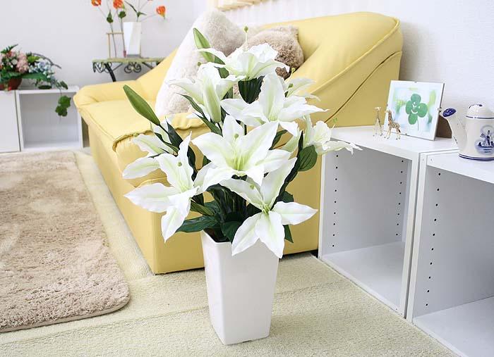 カサブランカ (植物)の画像 p1_39