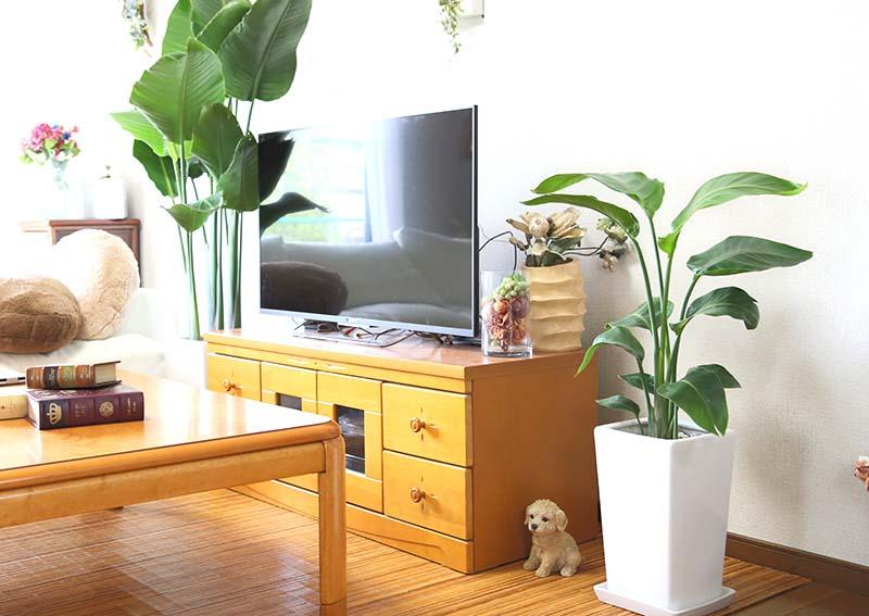 観葉植物と風水