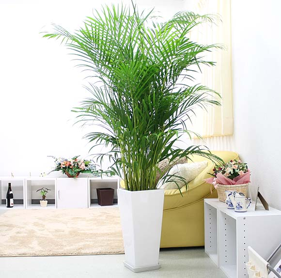 Dictionary for Decoracion con plantas sinteticas