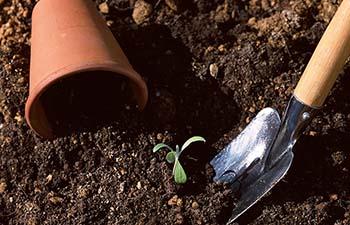 観葉植物の肥料の与え方