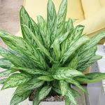 空気をきれいにする(空気清浄)観葉植物