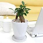 小型サイズの観葉植物