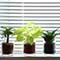 おしゃれなミニ観葉植物