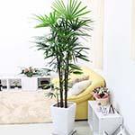 シュロ竹の通販