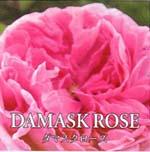 ダマスクローズ DAMASK ROSE