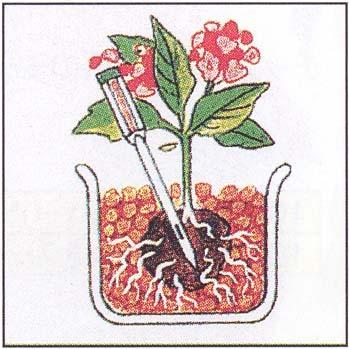 根っこ部分の土に届くように、セラミス・インジケーター(水分感知器)を挿し込みます。
