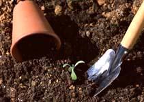ガーデニング / 専用の土 培養土