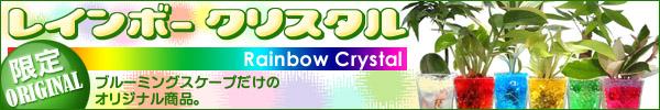 色まで楽しめる観葉植物 レインボークリスタル