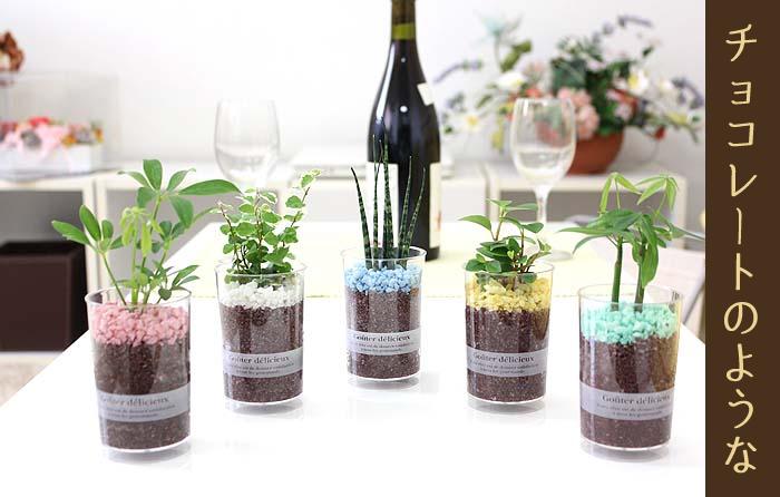 ショコラのような雰囲気♪ ミニ観葉植物 デザートカップ