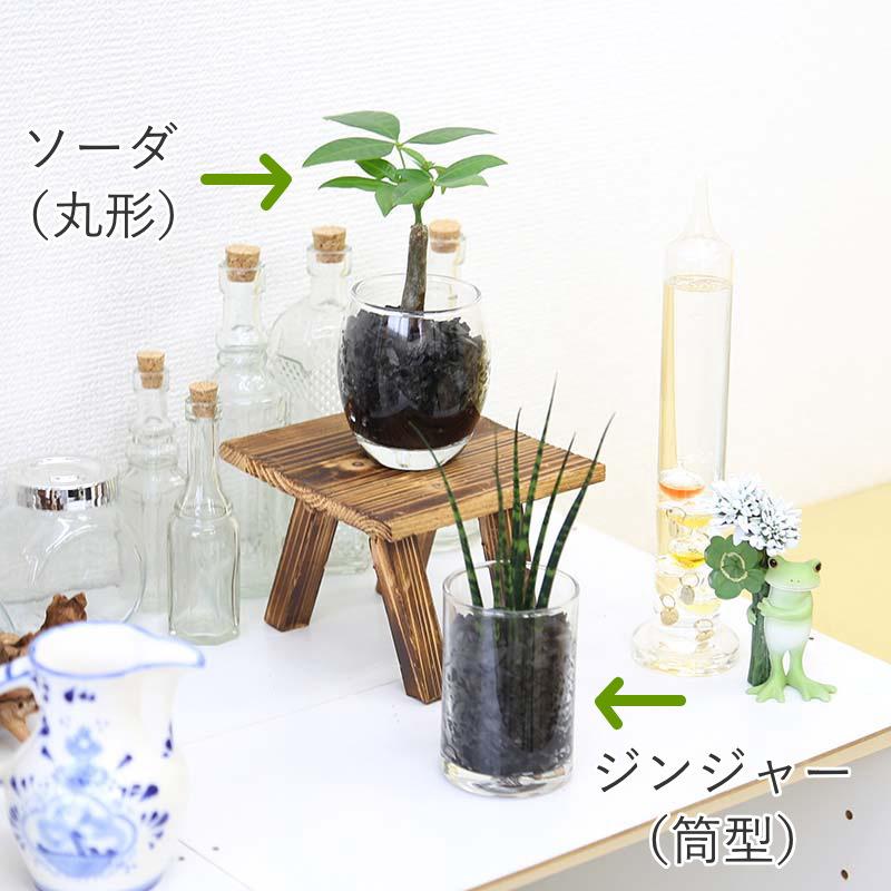 ミニ観葉植物の炭と水の具合