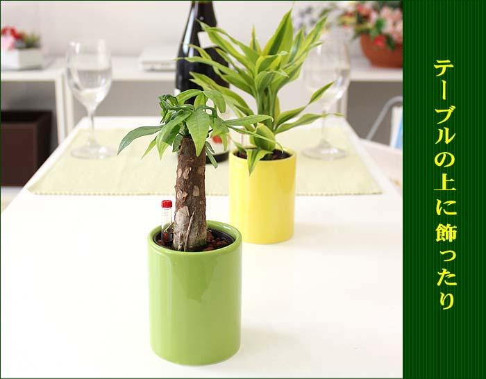 ミニ観葉植物 シリンダー