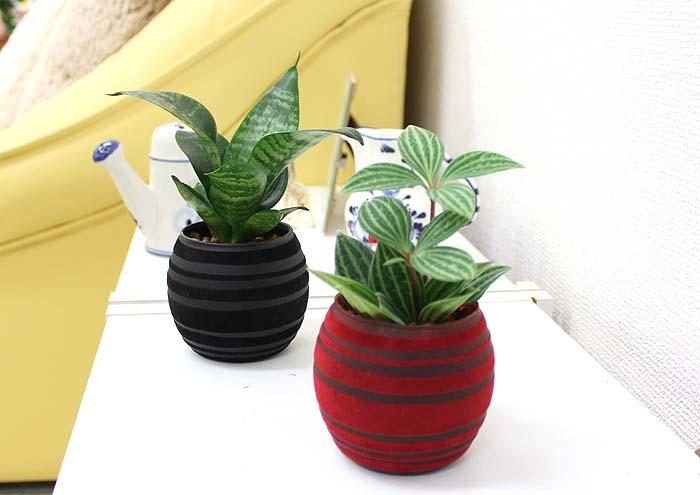 ミニ観葉植物 陶器鉢