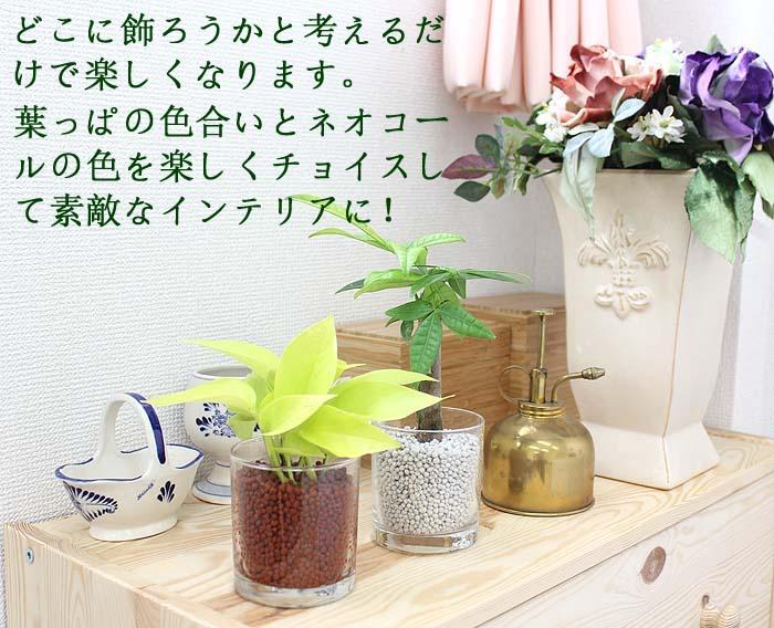 ミニ 観葉植物 ネオコール植え