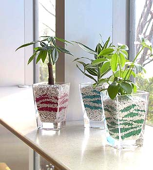 インテリアとしてもとってもオシャレなかわいいミニ観葉植物!