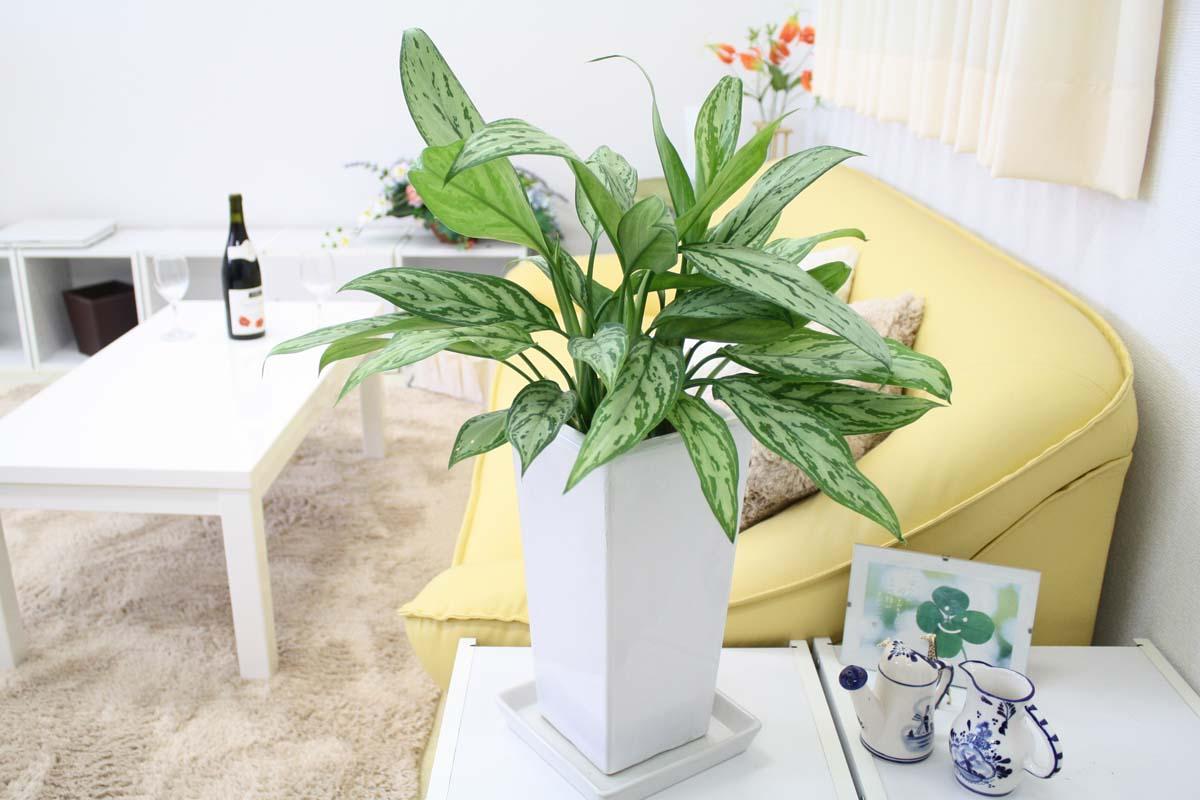 空気を綺麗にする観葉植物