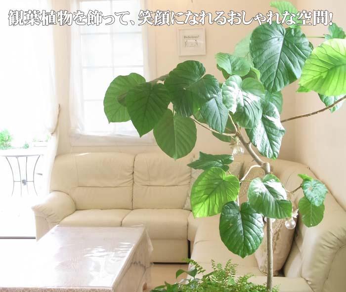 観葉植物を飾って、笑顔になれるおしゃれな空間!